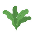foliage vegetation plant nature isolated icon vector image