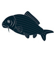 drawing carp fish vector image vector image