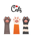 cats background kitten cartoon paws set vector image