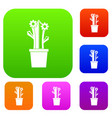 flowering cactus set color collection vector image vector image