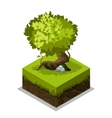 Isometric nature land grass and tree vector image