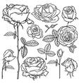 rose contour set vector image vector image