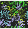 seamless pattern leaves of cannabis vector image