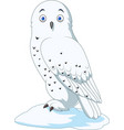 cartoon arctic owl isolated on white background vector image vector image