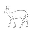 drawing doe vector image vector image