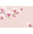 Tender magnolia vector image vector image
