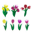 Tulips flower spring bouquet floral set