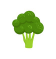broccoli isolated on white background vector image