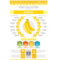 food infographics poster banana fruit vector image vector image