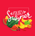 fruits summer concept vector image