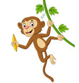 cartoon monkey hanging and holds banana vector image vector image