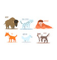 collection of arctic animals with names wisent vector image vector image