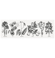 hand drawn agricultural plants set - potato soy vector image