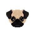 mops dog head in pixel art style vector image vector image