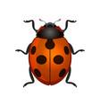 red ladybug on white background vector image