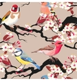 Seamless birds and blooming cherry vector image vector image