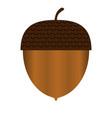 acorn vector image