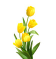 bouquet spring yellow tulips isolated on white vector image