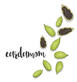 Cardamom isolated object sketch Spice for food vector image