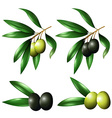 Green and black olives on branch vector image vector image