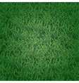 Seamless grass texture vector image vector image