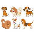 set of cartoon dogs of various breeds on white vector image vector image