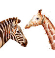 zebra and giraffe watercolor wildlife vector image vector image