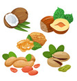 colourful sketch of different kinds of nuts vector image