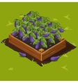 Vegetable Garden Box with Eggplant Set 5 vector image vector image