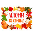 autumn frame of fall leaf pumpkin and mushroom vector image vector image