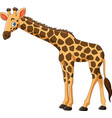 cartoon giraffe isolated on white background vector image vector image