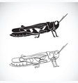 grasshopper on white background insect animal vector image vector image