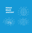 human brain anatomy card poster vector image