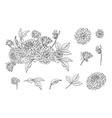 set of monochrome dahlia bouquet and floral vector image