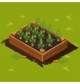 Vegetable Garden Box with Carrots Set 1 vector image