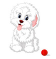 cute white lap-dog puppy posing vector image