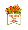 autumn time maple leaf or pumpkin poster vector image vector image