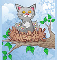 cat and kittens cartoon characters in a bird nest vector image