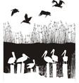 Flock of pelicans vector image vector image