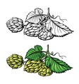 hand drawing a branch hops vector image vector image