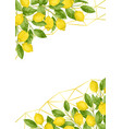 luxury lemon brunches and herbs background vector image vector image