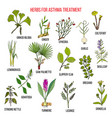 natural herbs collection for asthma treatment vector image vector image