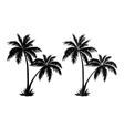 Palm trees black silhouettes vector image vector image