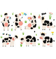 funny black and white cows collection vector image