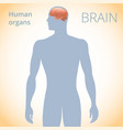 location of the brain in the body the human vector image vector image