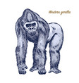 western or mountain gorilla big monkey or primate vector image vector image