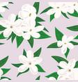 white jasmine flower branch of jasmine flowers vector image