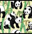 beautiful panda bamboo pattern great design vector image