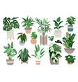 big set home plants in pots scandi design vector image