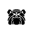 bulldog wild animal head mascot vector image